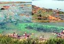 गंगा में तैरती लाशें कहाँ की हैं ? क्या ये वर्षों पुरानी परंपरा है ? या आने वाला है कोई बड़ा संकट, जानें सब कुछ-